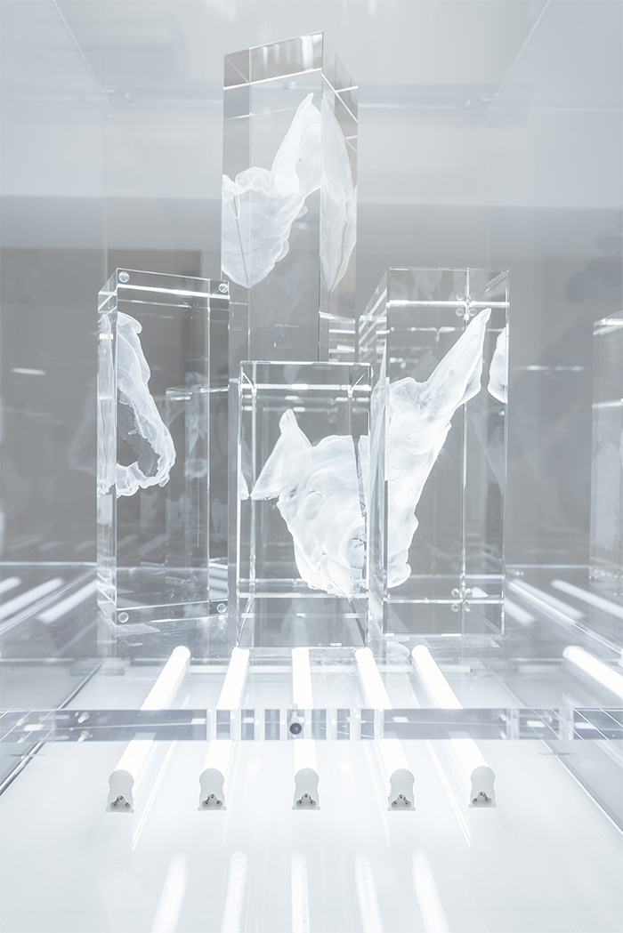 """""""Blackout, Pig head"""", cristal óptico grabado con láser en 3D, tubos LED y vitrina de metacrilato, 50 x 50 x 60 cm. Manuel Franquelo Giner, 2017"""